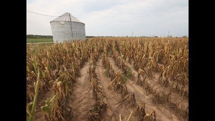 FAO advierte que el mundo podría sufrir crisis alimentaria