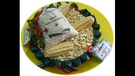 Liberan maíz de alta rentabilidad y calidad en el Cusco
