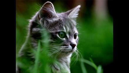 Los diez datos más sorprendentes acerca de los gatos