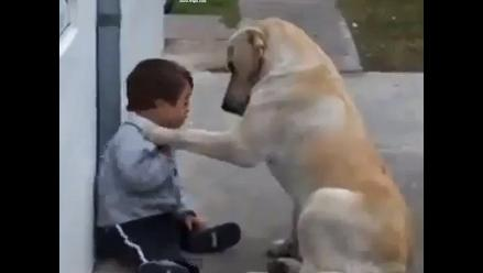 Niño con síndrome de Down es cuidado por su fiel perro