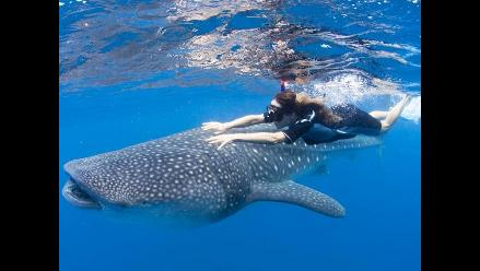 Población de ballenas jorobadas se triplica en Brasil