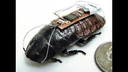 EEUU: Científicos crean cucarachas a control remoto para emergencias