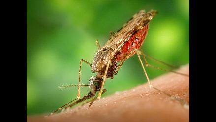 Brasil prevé efectuar pruebas de vacuna contra malaria en el 2013