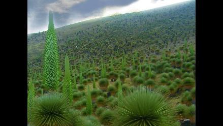 Cusco: Plantarán puyas de Raymondi en parque arqueológico de Raqchi