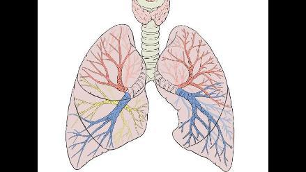 Se busca reparar pulmones donados para realizar trasplantes