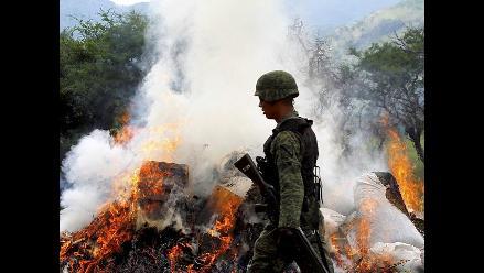 Destruyen plantación de marihuana en municipio de Hostotipaquillo