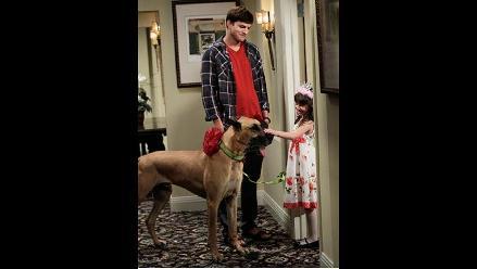 Ashton Kutcher adopta un perro enorme en la TV