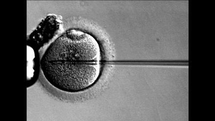 Mujeres se estresan durante las terapias de fertilidad