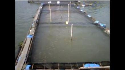 Producción capacitó a criadores de truchas y peces en el Vraem