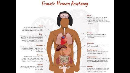 Retiran pósters de la anatomía de la mujer en Australia