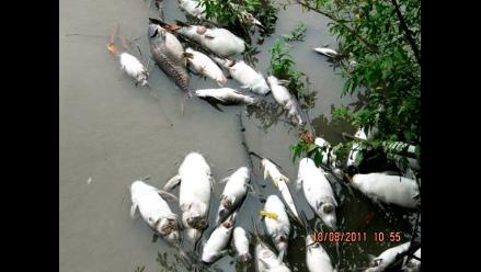 Amazonas: Hallan varados cientos de peces en el río Utcubamba