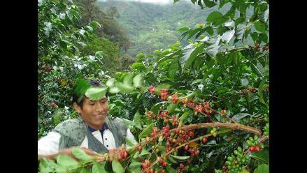 Fomentan asociatividad entre productores cafetaleros