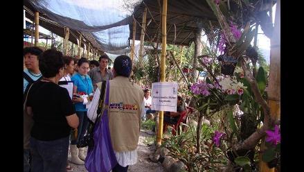 Moyobamba: Continúa Festival de la Orquídea hasta el domingo