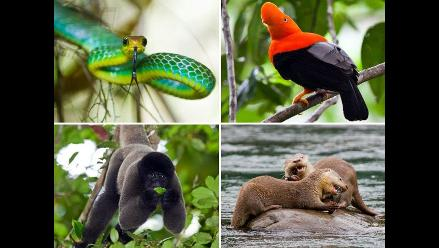Satipo participó en debate de reglamento de Ley forestal y de fauna