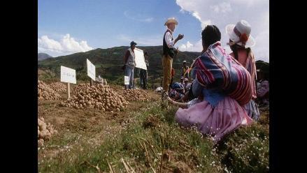 FAO: Precios de alimentos bajaron un 8 % en 2012