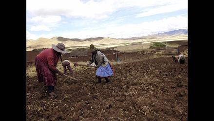 Puno: Agropecuarios preocupados por heladas y ausencia de lluvias