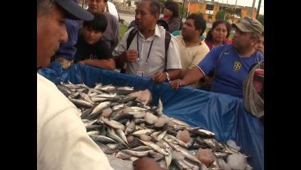 Decomisan ochenta toneladas de pescado en Trujillo