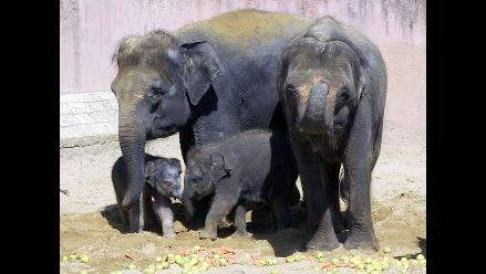 Indonesia: Ofrecen recompensa para esclarecer muerte de elefantes