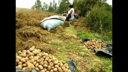 Más de 160 mil productores agropecuarios fueron censados en Cusco