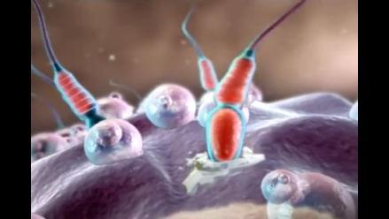 Lácteos enteros afectan negativamente la fertilidad masculina