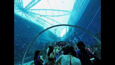 El oceanario más grande del mundo donde los peces se sienten en el mar