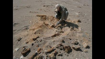 Hallan fósiles de pingüino gigante en la Antártida