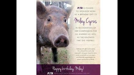 Miley Cyrus recibe un cerdito como regalo de cumpleaños