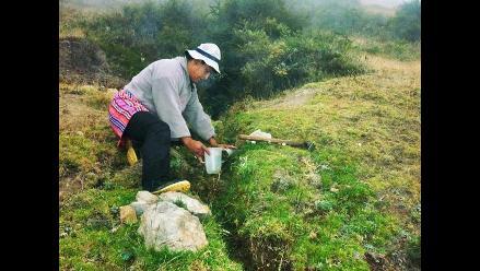 Los prodigiosos micropuquiales de la comunidad Patay en Tarma