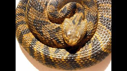 Egipto: Serpiente muerde a viajero en pleno vuelo