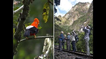 Ornitólogos reunidos en Perú para competencia de observación de aves