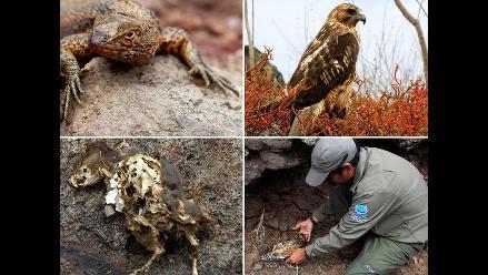 Ratas invaden las Islas Galápagos y amenazan ecosistema