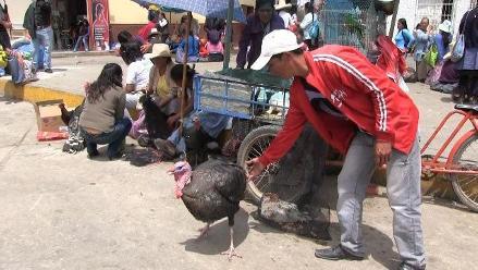 Precio del kilo de pavo se vende a 14 soles en Cajamarca
