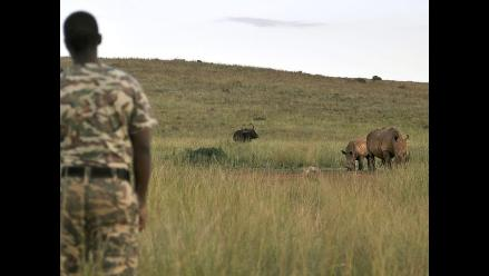 Sudáfrica ofrece recompensas para detener cazadores furtivos