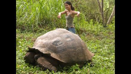 Liberan en su hábitat a nueve tortugas gigantes criadas en cautiverio