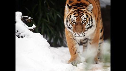 Zoológicos alemanes se cubren de nieve