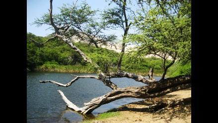 Pacasmayo: Autoridades se comprometen para salvar bosque El Cañoncillo