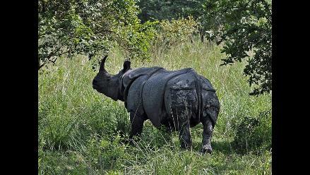 Caza furtiva acabó con 633 rinocerontes en Sudáfrica en el año