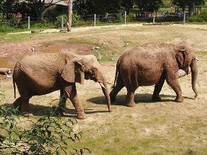 Cazadores furtivos matan 11 elefantes en una reserva natural de Kenia