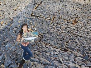 Sopa de aleta de tiburón: deliciosamente peligrosa