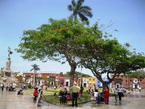 Descartan tala de árboles de plaza de armas de Trujillo