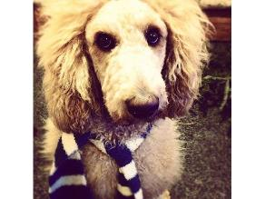 EEUU: Vecinos confunden a un perro con un león