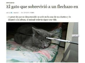 EEUU: Un gato sobrevivió a un flechazo en la cabeza