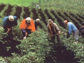 Conveagro: Dinero electrónico favorecerá a 1,8 millones de agricultores