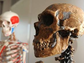 Científico propone buscar vientre de alquiler para un bebé neandertal