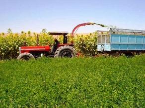 Cajamarca: Cultivos serán protegidos con seguro agrario