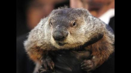 Marmota Phil enfrenta pena de muerte por errar en pronóstico del clima
