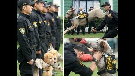Vea la destreza y habilidad de la Policía Canina en su 52 aniversario