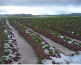 Pobladores de Canas afectados por nevada