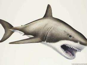 Hallan fósiles del mayor depredador marino de la historia humana