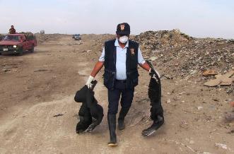 Un 90% de avance registra caza sanitaria de gallinazos en Chiclayo